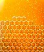 Honey macro in comb texture pattern background.