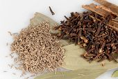 stock photo of garam masala  - ingredients for garam masala  - JPG