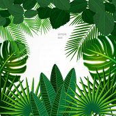 stock photo of jungle exotic  - Tropical leaves - JPG