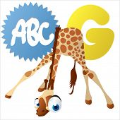 stock photo of g-spot  - G is for Giraffe - JPG