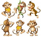 image of playmates  - Illustration of the playful wild monkeys on a white background - JPG
