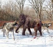 foto of carnivores  - An illustration of Dire Wolves attacking a young Woolly Mammoth - JPG