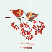 picture of robin bird  - Christmas greeting card with robins - JPG