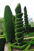 Постер, плакат: Декоративные зеленый парк ботанический сад Фуншал Мадейра