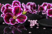stock photo of geranium  - beautiful spa background of geranium flower beads and black zen stones with drops in reflection water closeup - JPG