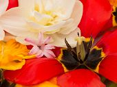 pic of stamen  - yellow pistil and stamen black bright red tulips and white daffodils in the spring bouquet - JPG
