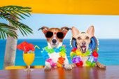 foto of hot couple  - funny cool couple of dogs drinking cocktails at the bar in a beach club party with ocean view on summer vacation holidays - JPG