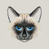picture of siamese  - Beautiful vector Siamese cat with bright blue eyes - JPG