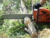 stock photo of chainsaw  - sawing wood with a chainsaw - JPG