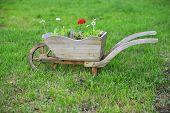 image of wheelbarrow  - country garden flower wheelbarrow at summer day - JPG