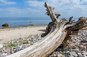 stock photo of driftwood  - driftwood old washed - JPG