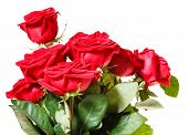 stock photo of bunch roses  - side view of bunch of red roses isolated on white background - JPG
