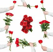foto of bunch roses  - set of red rose bunches of flowers in male hand isolated on white background - JPG