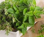 pic of oregano  - Fresh herbs - JPG