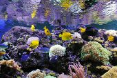 picture of shoal fish  - Underwater scene showing different colorful fishes swimming - JPG