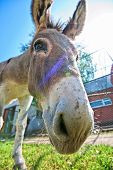 foto of headstrong  - Donkey closeup portrait in sunny day - JPG