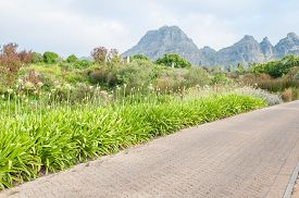stock photo of fynbos  - White agapanthus flowers and several fynbos species line a road near Stellenbosch - JPG