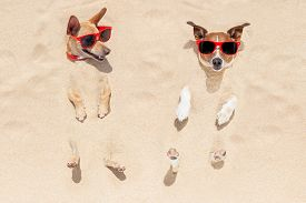 picture of toy dog  - couple of two dogs buried in the sand at the beach on summer vacation holidays having fun and enjoying wearing red sunglasses fun and enjoying wearing red sunglasses - JPG