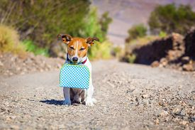 picture of sabbatical  - jack russell dog abandoned and left all alone on the road or street with luggage bag or suitcase begging to come home to owners - JPG