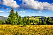 Conifer Forest In Classic Carpathian Mountain Autumn Landscape poster