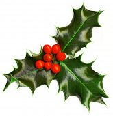 Christmas decoration - isolated holly with berries on the white
