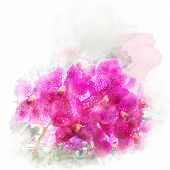 Illustration Of Beautiful Blossom Vanda Orchid. Artistic Floral Abstract Background. Watercolor Pain poster