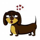 Little Dog - Lovely Little Dachshund (seductive Female) poster