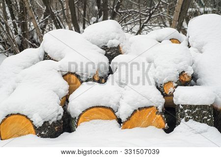 poster of Row Of Logs Lying On A Ground Covered With Fresh Thin Snow Cover.snow-covered Logs Lie On The Ground