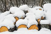 Row Of Logs Lying On A Ground Covered With Fresh Thin Snow Cover.snow-covered Logs Lie On The Ground poster