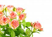 stock photo of red rose flower  - Bouquet of light pink roses with green leafes - JPG
