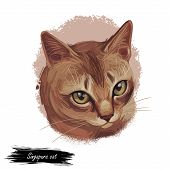 Raw And Pedigreed Singapura, Drain Kucinta Love Cat. Digital Art Illustration Of Pussy Kitten Portra poster