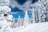 Winter Wonderland Entire Forest Covered In Deep Powder Snow , Amazing Weather Event. Climate Change  poster