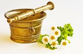 pic of feverfew  - mortar with feverfew - JPG