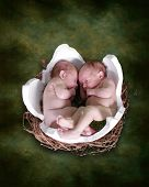 stock photo of twin baby girls  - two newborns inside cracked egg fantasy portrait - JPG