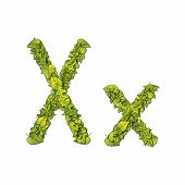 picture of storybook  - Leafy storybook font depicting a letter X in upper and lower case - JPG