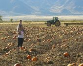 A Mother And Daughter Search A Patch For A Pumpkin