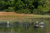 Sri Lanka. Yala National Park. Lake View.