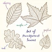 Collection of leaves: cherry, oak, maple, poplar.
