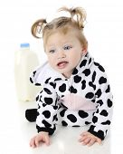 An adorable baby girl in a cow costume, unhappily crawling away in from a half-gallon of milk.  On a
