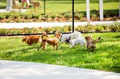 image of yorkie  - Cute little puppies playing in the dog park - JPG