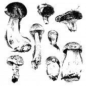 foto of morel mushroom  - hand drawn mushroom sketches  over white background - JPG