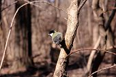 stock photo of great tit  - Great tit on a branch of a tree in the park - JPG