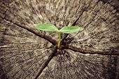 stock photo of dead plant  - a young green plant growing on a dead tree - JPG