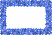 foto of forget me not  - frame made of blue forget me not flowers - JPG