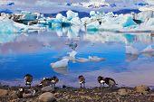 foto of floating  - Yokulsarlon Glacial Lagoon in Iceland - JPG