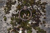 stock photo of tombstone  - Old tombstone ring at the abandoned cemetery in Terezin - JPG