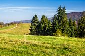 foto of coniferous forest  - hillside with coniferous forest in autumn mountains - JPG