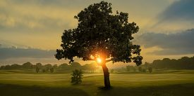 stock photo of spring-weather  - Amazing sunrise and the tree in a golf course - JPG