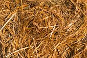 foto of hay bale  - Piled hay bales on a field at sunset time - JPG
