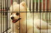 image of caged  - Pomeranian puppy in a cage at the park